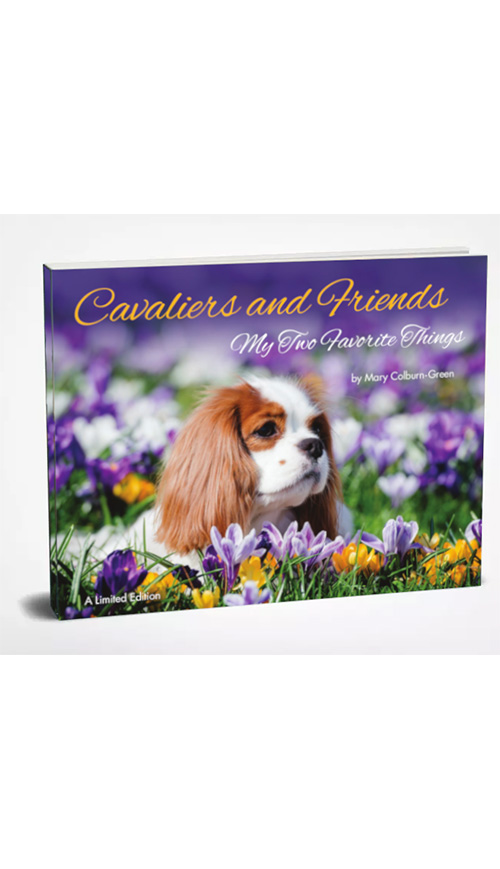 coffee table, dog lovers, table book, beautiful book, great coffee, perfect gift, gift for dog, love dogs
